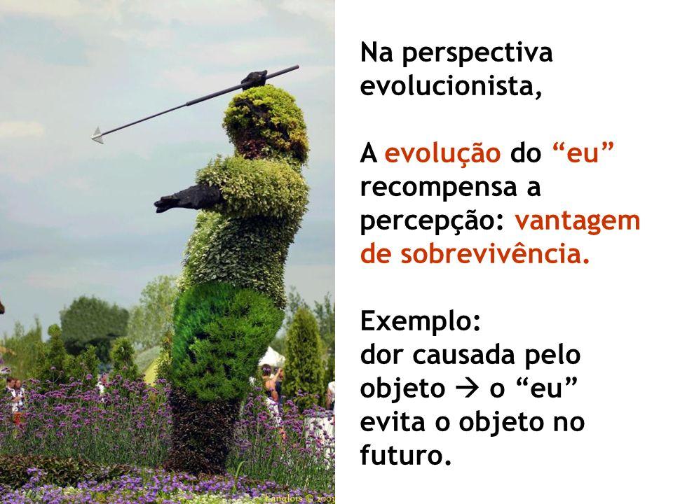 Na perspectiva evolucionista,