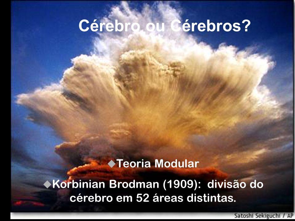 Korbinian Brodman (1909): divisão do cérebro em 52 áreas distintas.