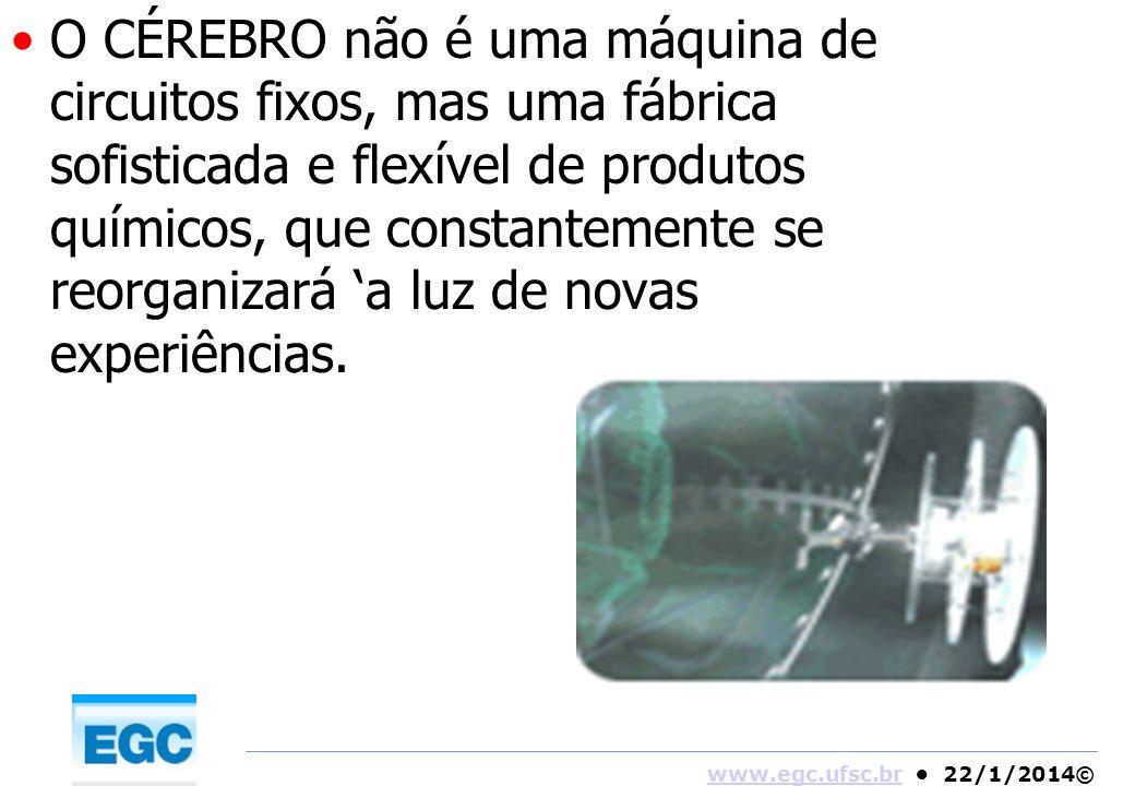O CÉREBRO não é uma máquina de circuitos fixos, mas uma fábrica sofisticada e flexível de produtos químicos, que constantemente se reorganizará 'a luz de novas experiências.