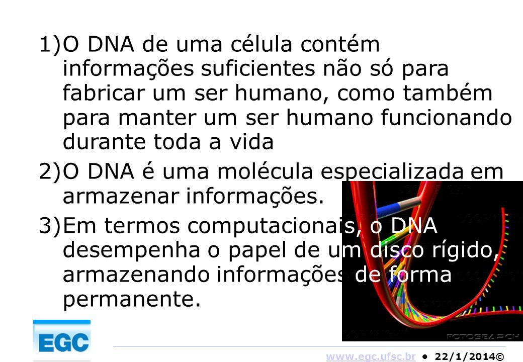 O DNA de uma célula contém informações suficientes não só para fabricar um ser humano, como também para manter um ser humano funcionando durante toda a vida