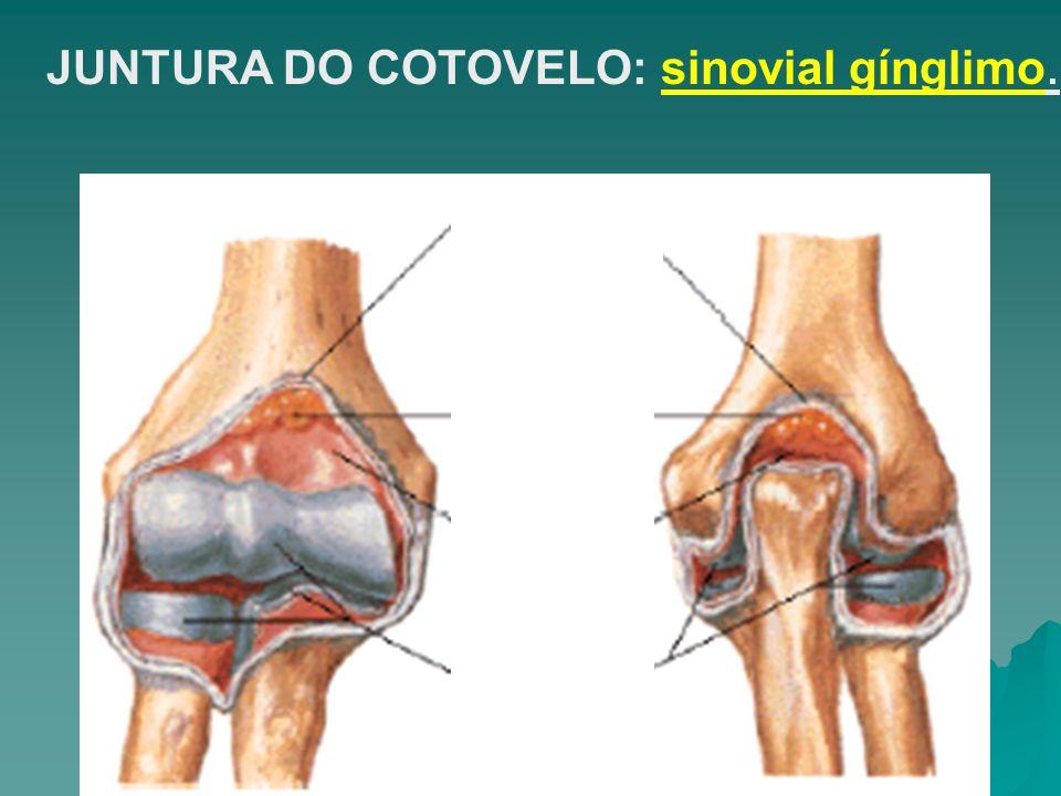 JUNTURA DO COTOVELO: sinovial gínglimo.