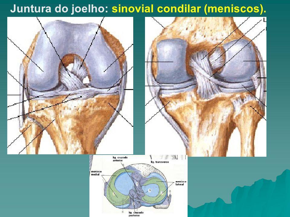 Juntura do joelho: sinovial condilar (meniscos).