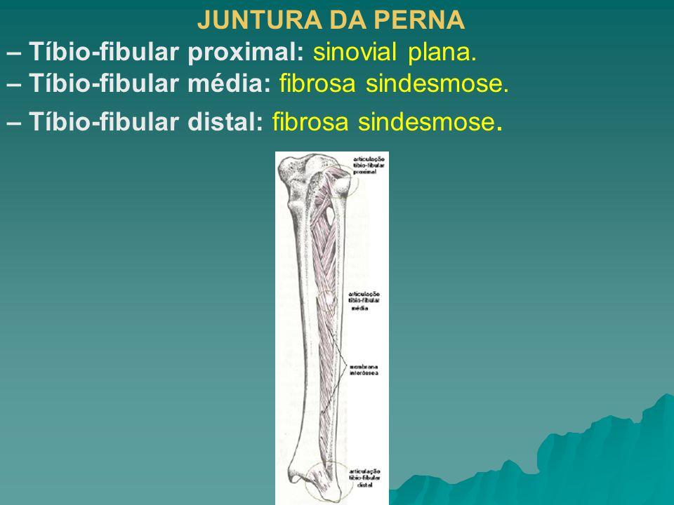 JUNTURA DA PERNA – Tíbio-fibular proximal: sinovial plana. – Tíbio-fibular média: fibrosa sindesmose.