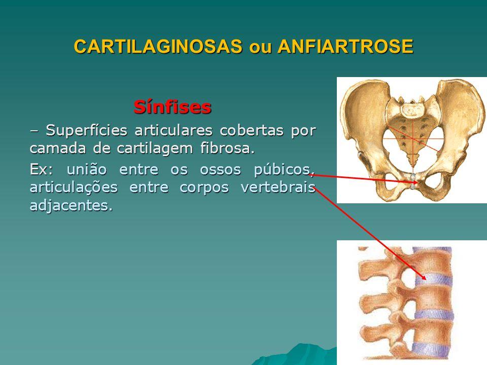 CARTILAGINOSAS ou ANFIARTROSE