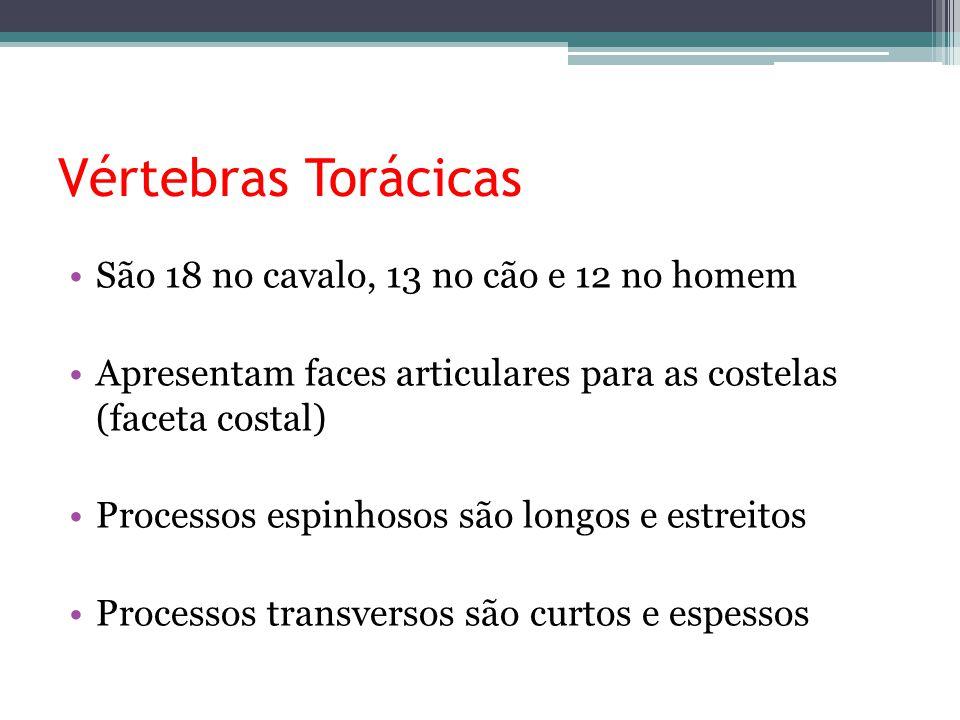 Famoso Números Vértebras Torácicas Foto - Anatomía de Las ...