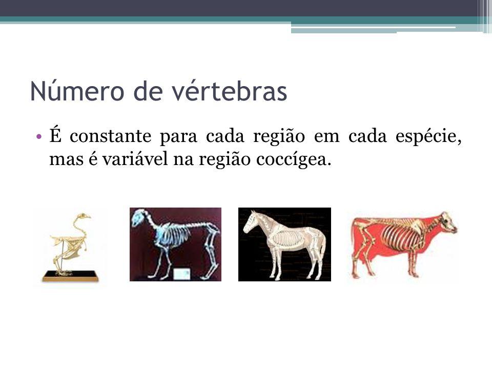 Lujo Números De Las Vértebras Imagen - Imágenes de Anatomía Humana ...