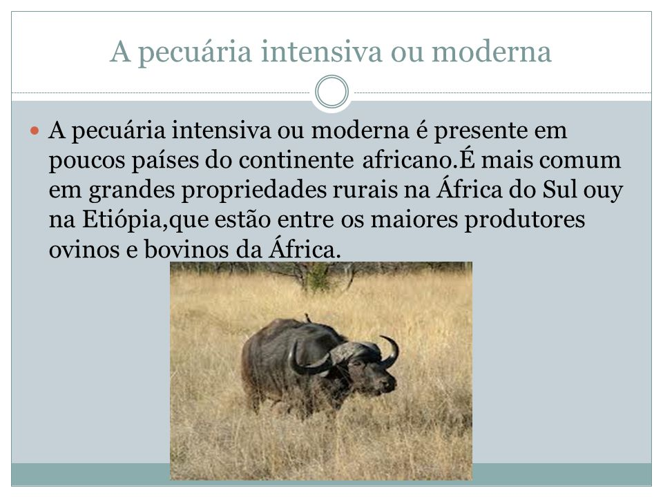 A pecuária intensiva ou moderna