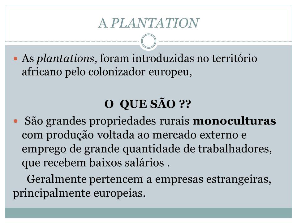 A PLANTATION As plantations, foram introduzidas no território africano pelo colonizador europeu, O QUE SÃO