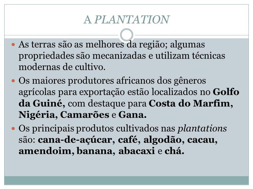 A PLANTATION As terras são as melhores da região; algumas propriedades são mecanizadas e utilizam técnicas modernas de cultivo.