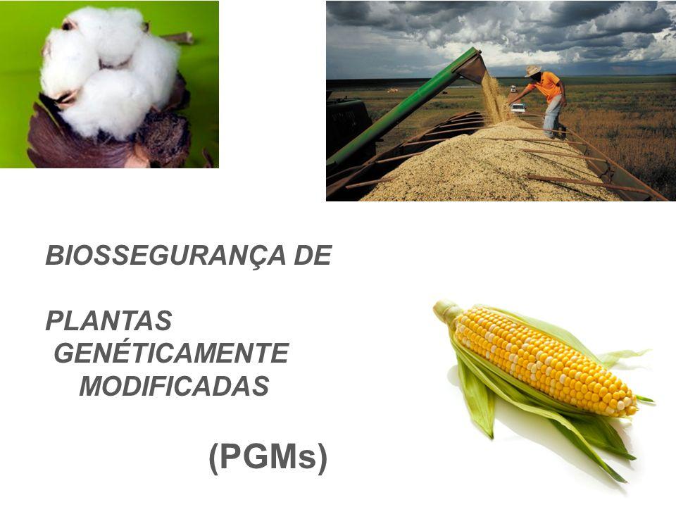 BIOSSEGURANÇA DE PLANTAS GENÉTICAMENTE MODIFICADAS (PGMs)
