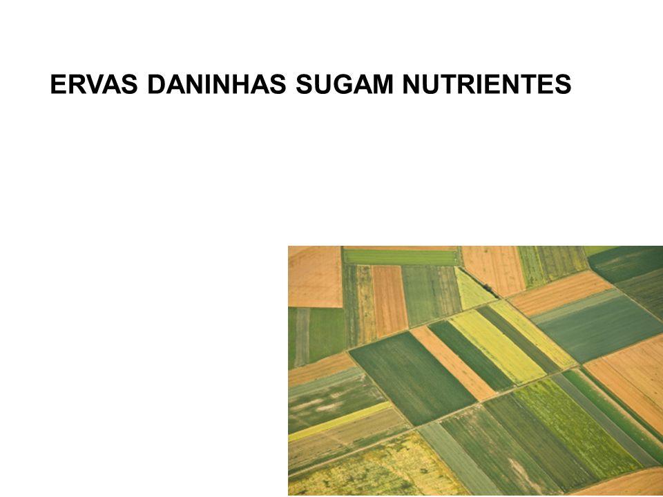 ERVAS DANINHAS SUGAM NUTRIENTES
