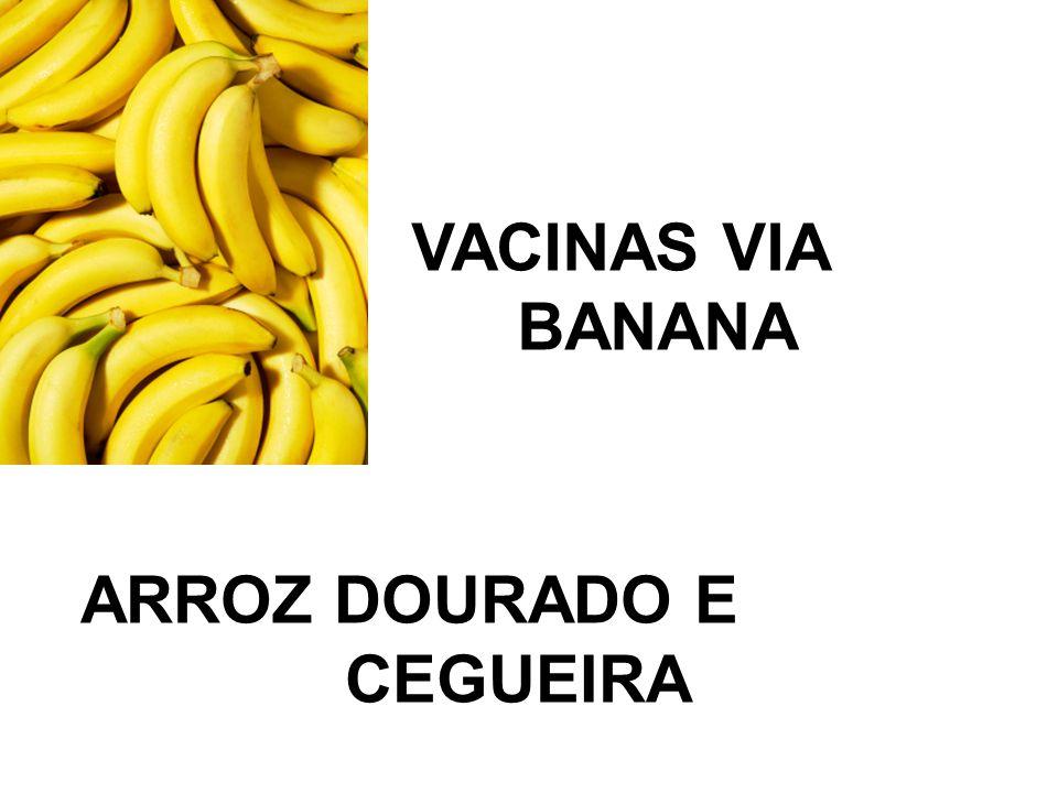 VACINAS VIA BANANA ARROZ DOURADO E CEGUEIRA