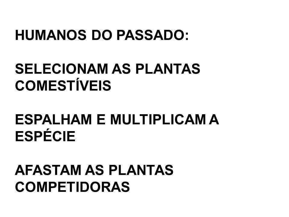 HUMANOS DO PASSADO: SELECIONAM AS PLANTAS COMESTÍVEIS.