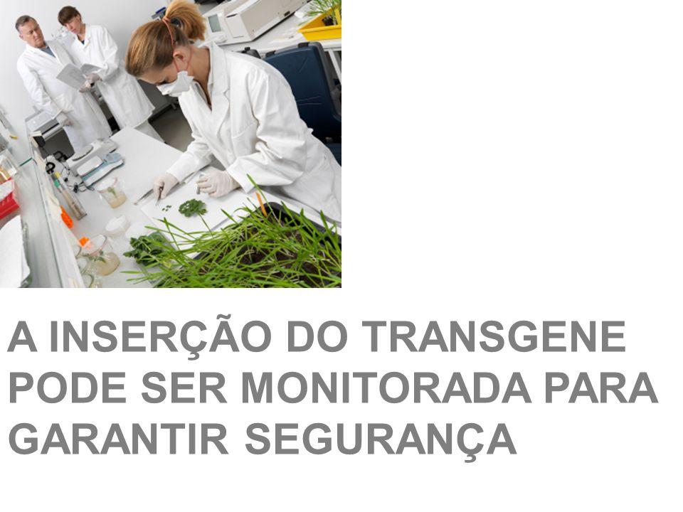 A INSERÇÃO DO TRANSGENE PODE SER MONITORADA PARA GARANTIR SEGURANÇA