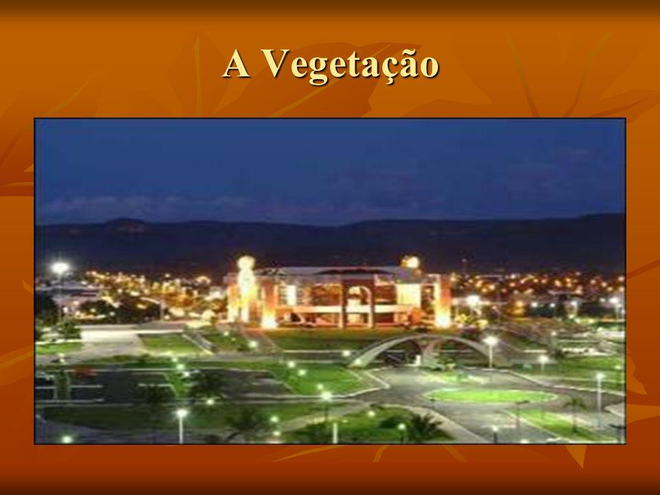 A Vegetação