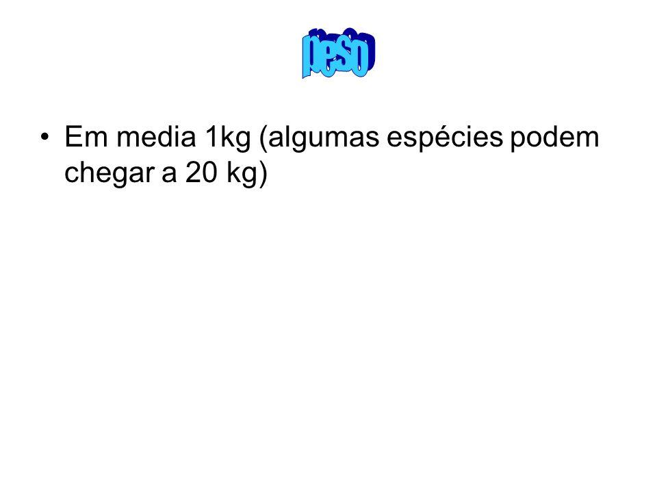 peso Em media 1kg (algumas espécies podem chegar a 20 kg)