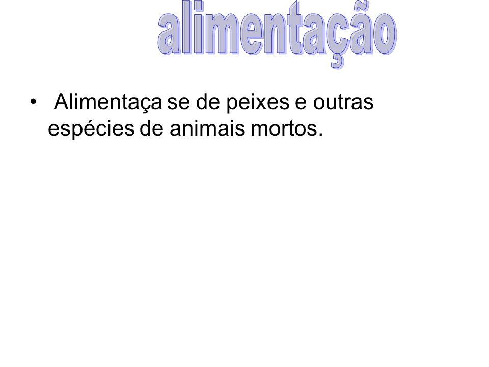 alimentação Alimentaça se de peixes e outras espécies de animais mortos.