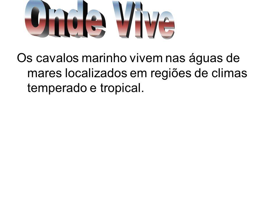 Onde ViveOs cavalos marinho vivem nas águas de mares localizados em regiões de climas temperado e tropical.