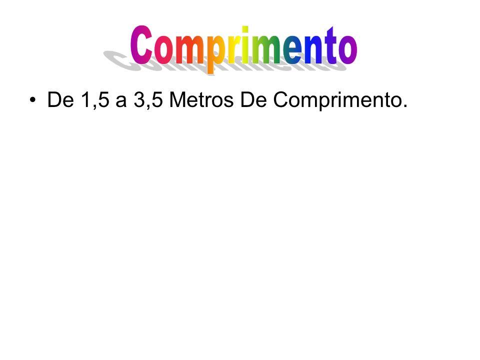 Comprimento De 1,5 a 3,5 Metros De Comprimento.