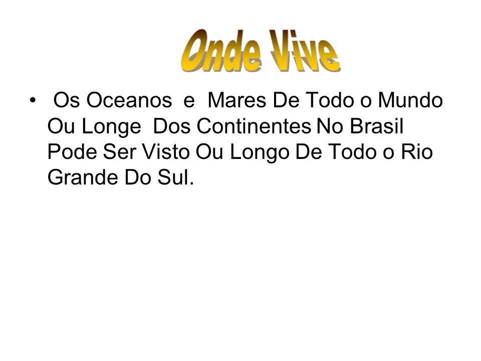 Onde Vive Os Oceanos e Mares De Todo o Mundo Ou Longe Dos Continentes No Brasil Pode Ser Visto Ou Longo De Todo o Rio Grande Do Sul.