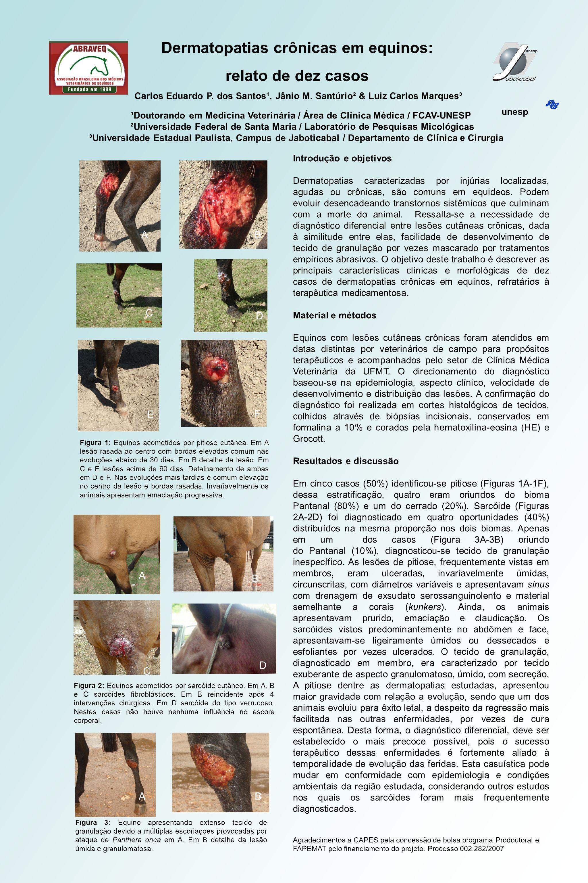 Dermatopatias crônicas em equinos: