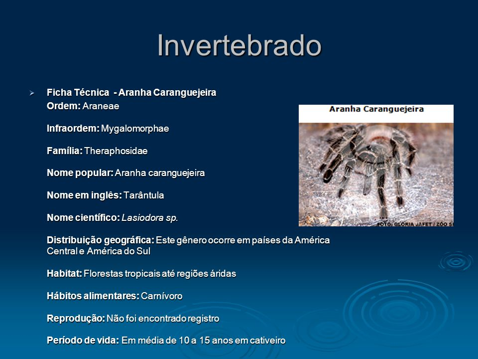Invertebrado Ficha Técnica - Aranha Caranguejeira