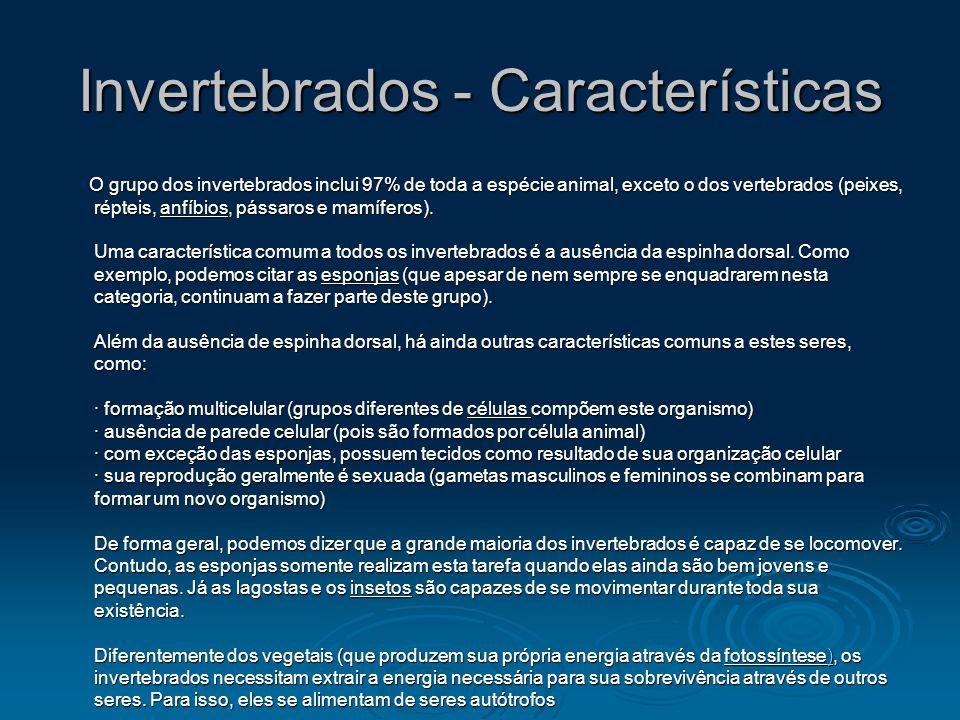 Invertebrados - Características