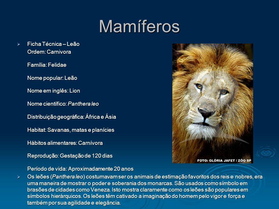 Mamíferos Ficha Técnica – Leão