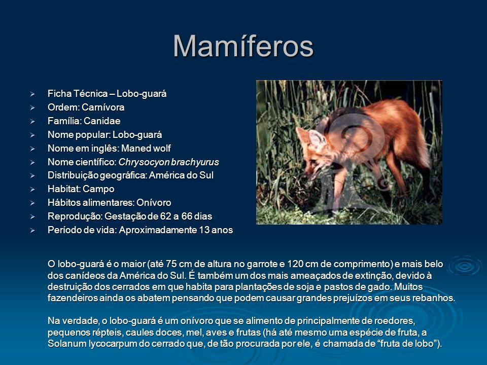 Mamíferos Ficha Técnica – Lobo-guará Ordem: Carnívora Família: Canidae
