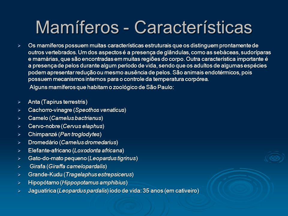 Mamíferos - Características