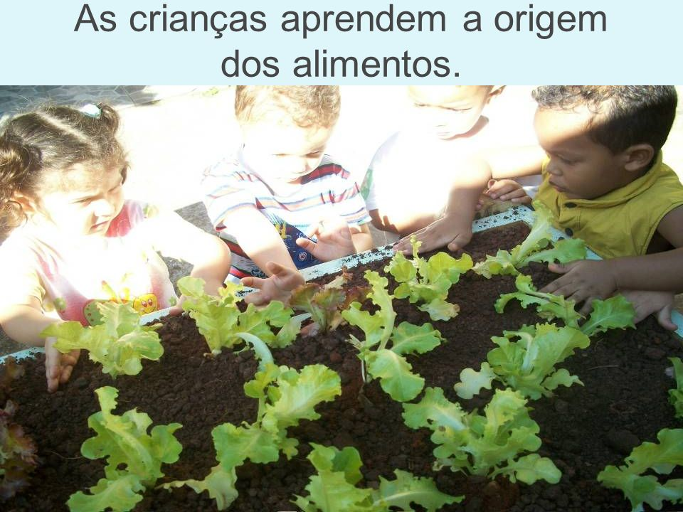 As crianças aprendem a origem dos alimentos.