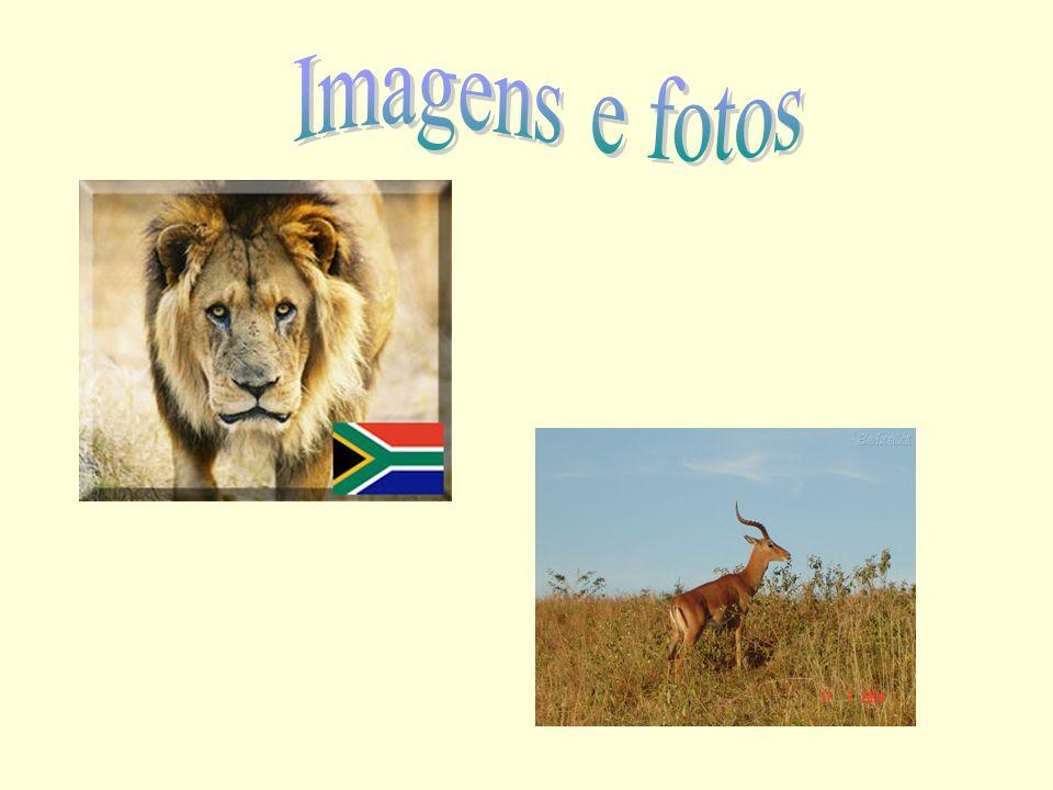 Imagens e fotos