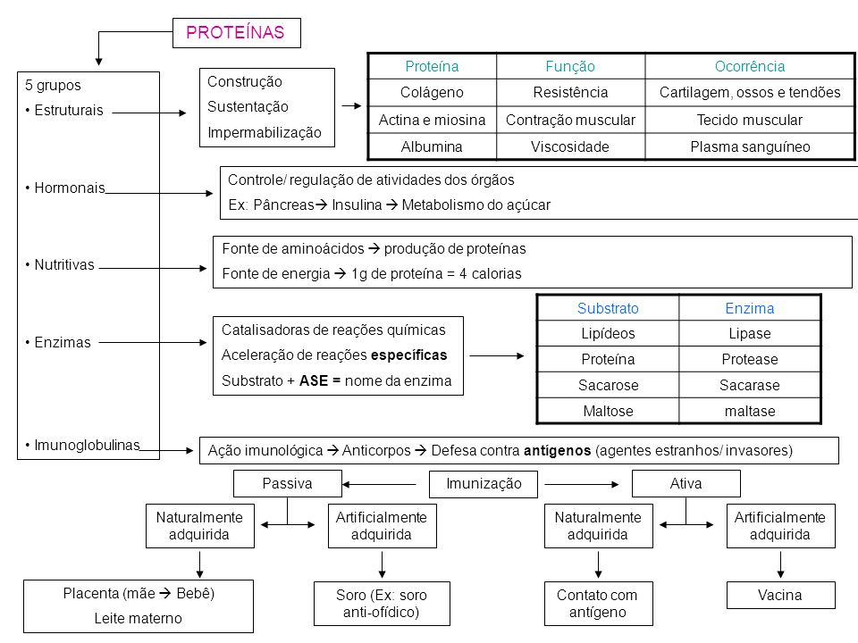 PROTEÍNAS Proteína Função Ocorrência Colágeno Resistência