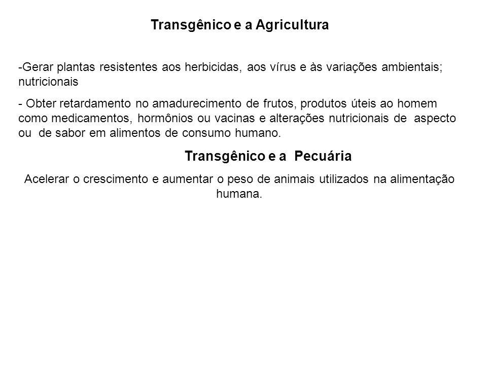 Transgênico e a Agricultura Transgênico e a Pecuária