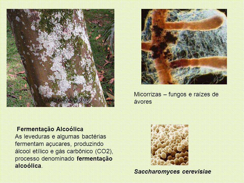 Micorrizas – fungos e raízes de ávores