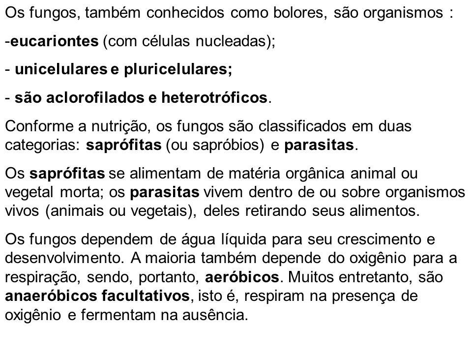 Os fungos, também conhecidos como bolores, são organismos :