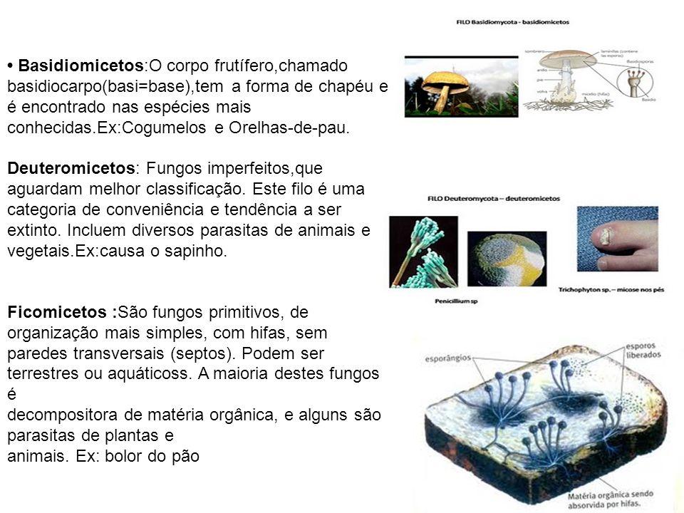 • Basidiomicetos:O corpo frutífero,chamado basidiocarpo(basi=base),tem a forma de chapéu e é encontrado nas espécies mais conhecidas.Ex:Cogumelos e Orelhas-de-pau. Deuteromicetos: Fungos imperfeitos,que aguardam melhor classificação. Este filo é uma categoria de conveniência e tendência a ser extinto. Incluem diversos parasitas de animais e vegetais.Ex:causa o sapinho.