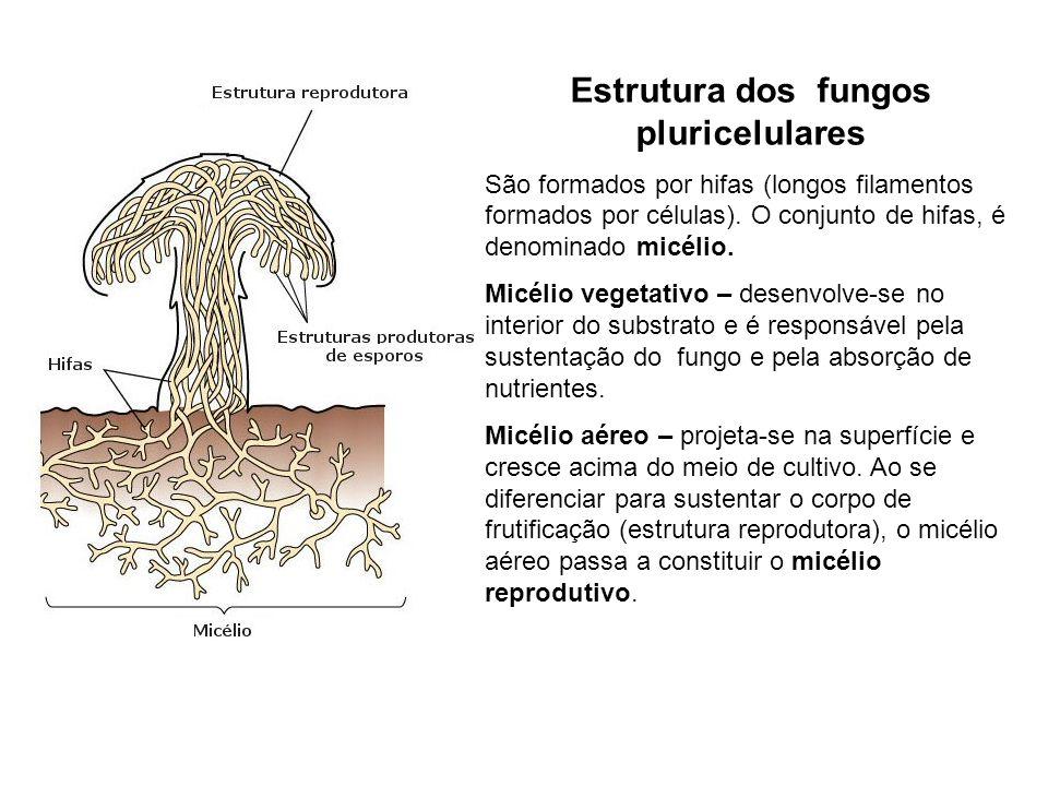 Estrutura dos fungos pluricelulares