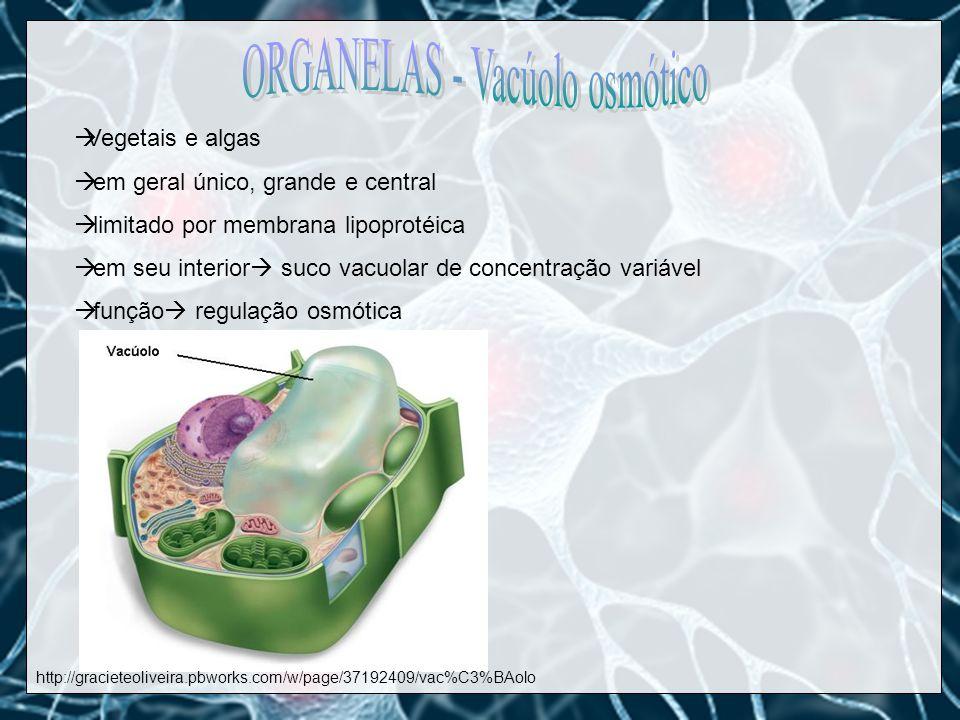 ORGANELAS - Vacúolo osmótico