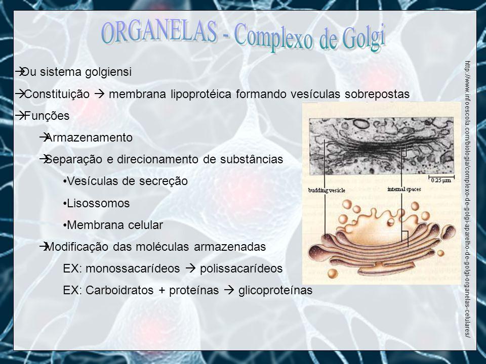 ORGANELAS - Complexo de Golgi