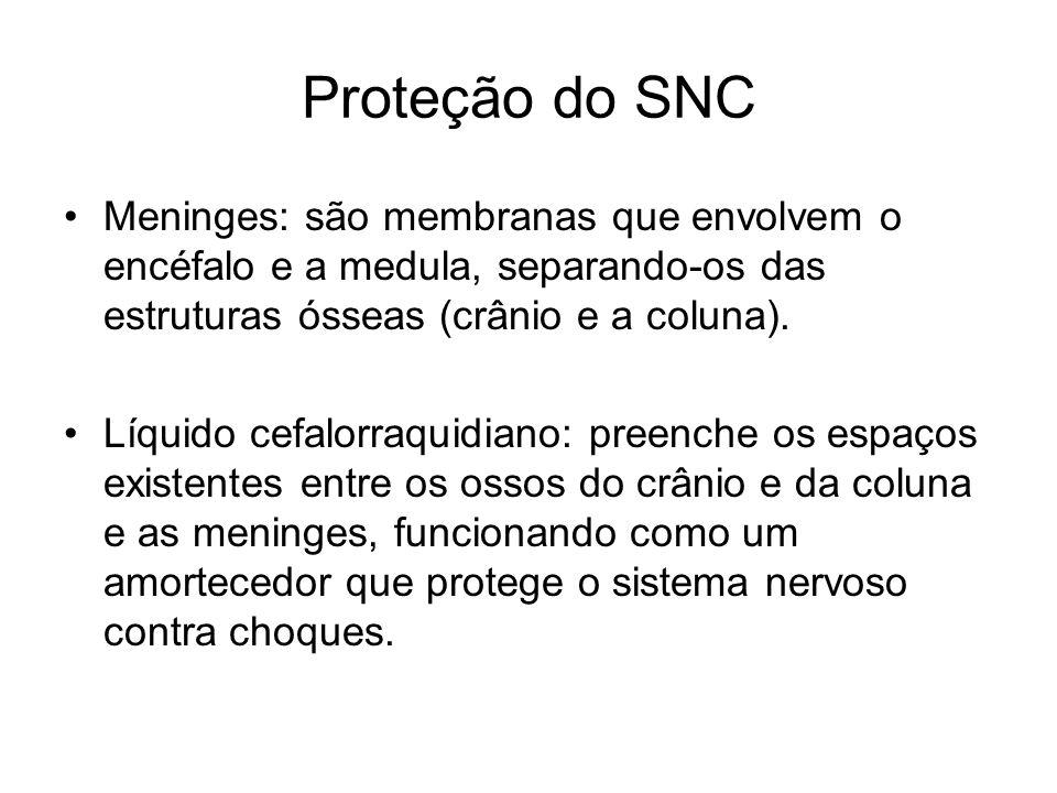 Proteção do SNC Meninges: são membranas que envolvem o encéfalo e a medula, separando-os das estruturas ósseas (crânio e a coluna).