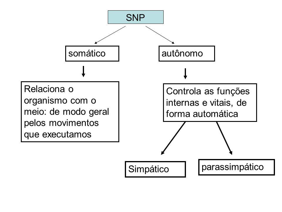 SNP somático. autônomo. Relaciona o organismo com o meio: de modo geral pelos movimentos que executamos.