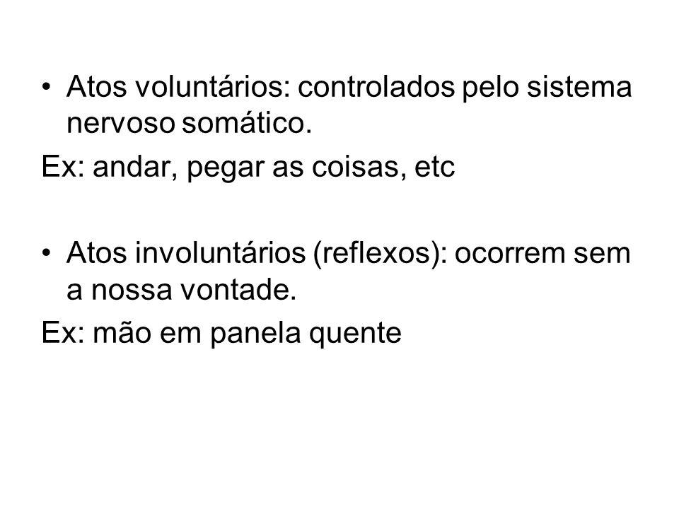 Atos voluntários: controlados pelo sistema nervoso somático.