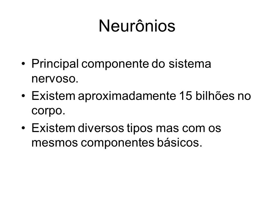 Neurônios Principal componente do sistema nervoso.