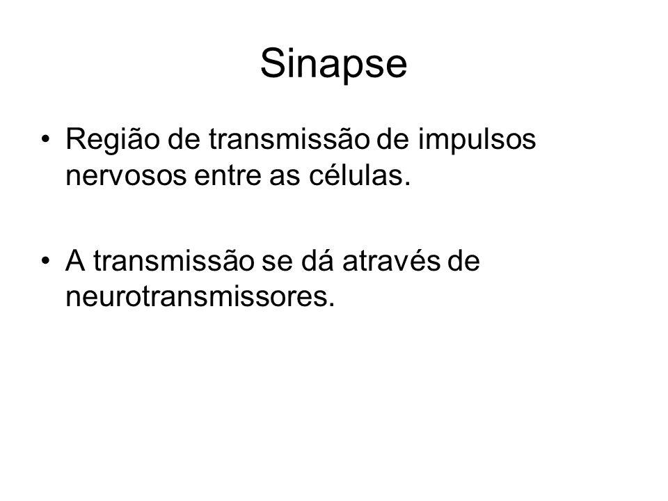 Sinapse Região de transmissão de impulsos nervosos entre as células.