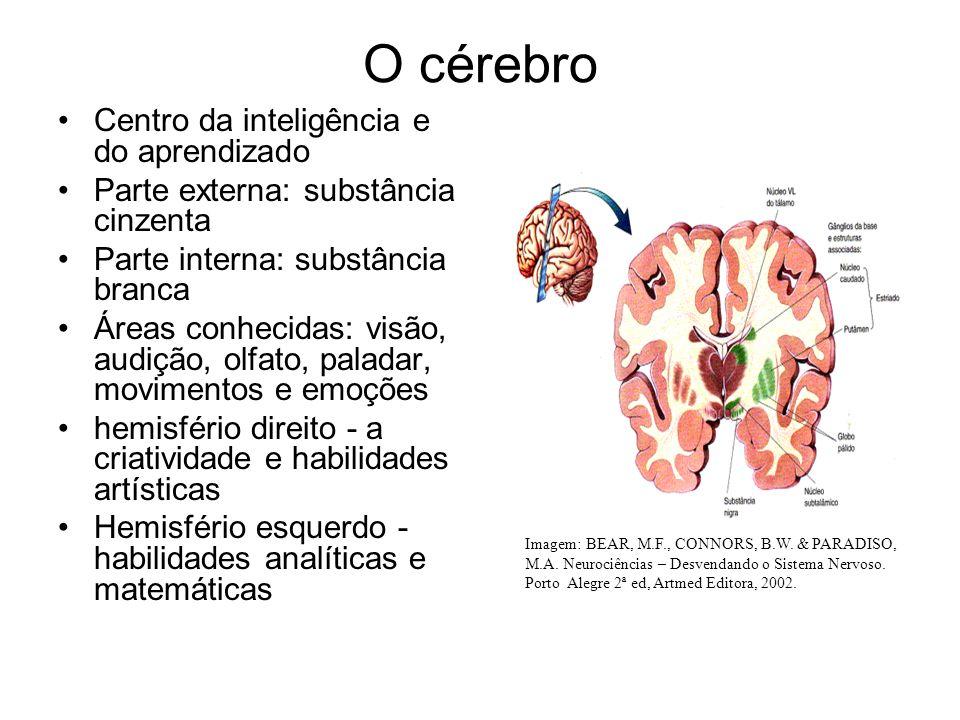 O cérebro Centro da inteligência e do aprendizado