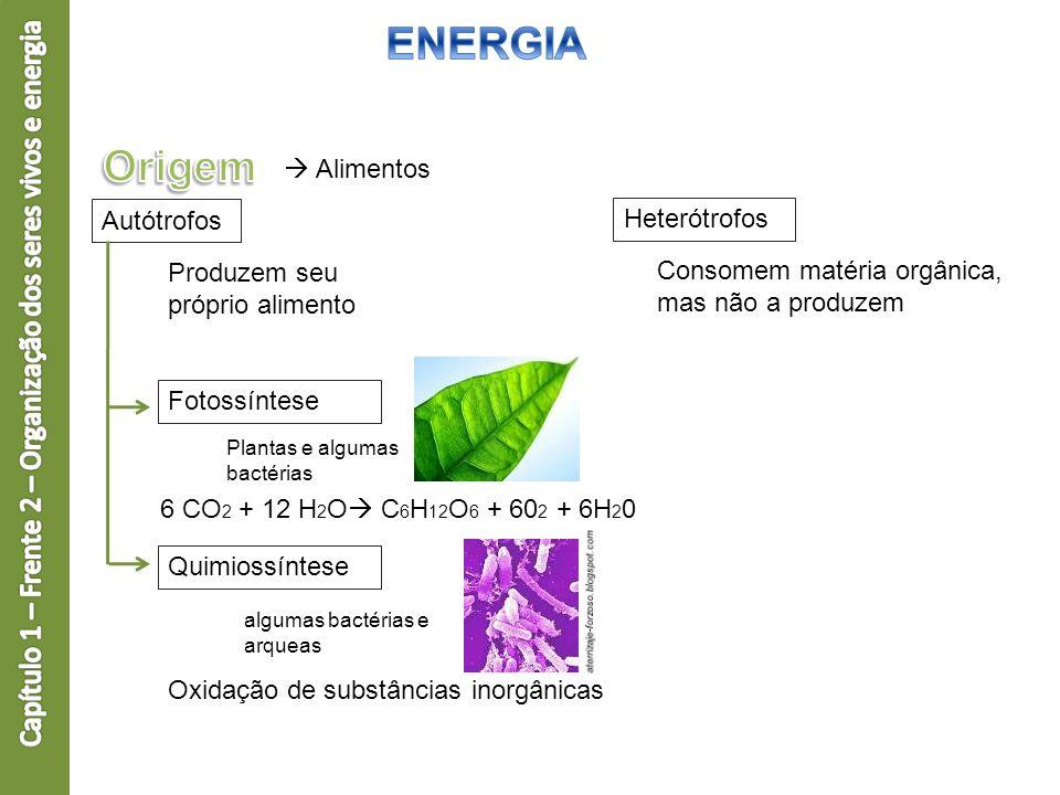 Capítulo 1 – Frente 2 – Organização dos seres vivos e energia