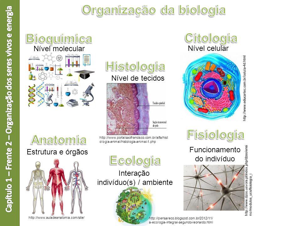 Organização da biologia