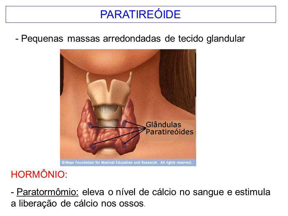 PARATIREÓIDE - Pequenas massas arredondadas de tecido glandular