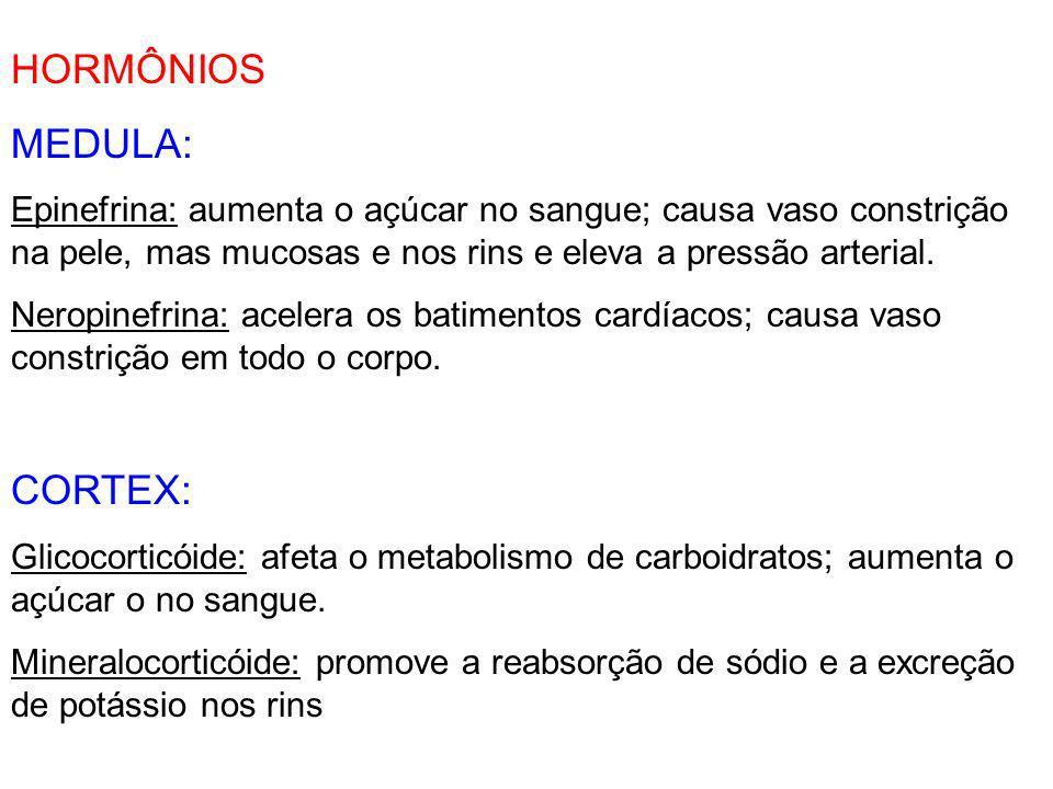 HORMÔNIOS MEDULA: CORTEX: